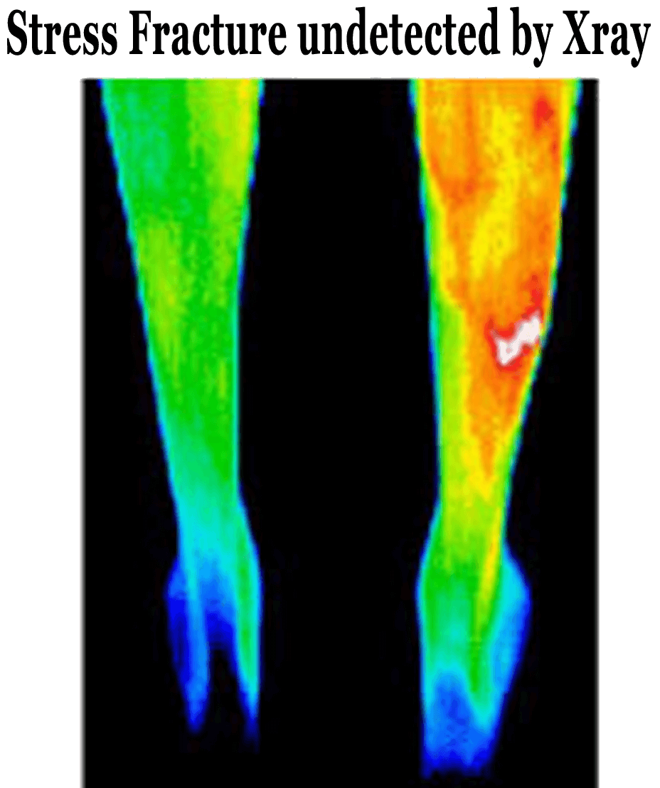 ThermoImages6
